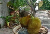 vaso de plantas frutíferas