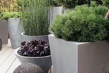 garden/ roof garden