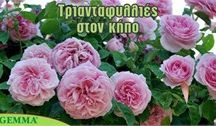 Καλιέργια λουλουδιών