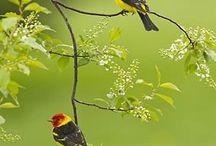 birds / by Tina Borda DuTill