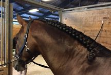 Grooming Tips for Performance Horses