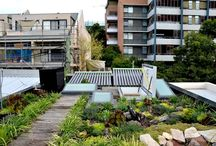 Apartment and Townhouse green roofs / Townhouse and residential green roofs