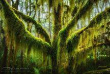 Szép fák