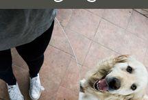 Doggoz