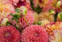 flores♥