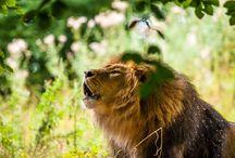 Animals / My photography of animals