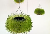 Indoor plant projects