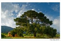 Sierra Salinas / Rutas, parajes, senderos, cuevas y mucha naturaleza