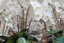 Palm Beach Fine Silk Florals