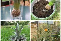 Plantes et potager