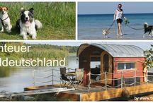Reisen mit Hund / Alles zum Thema Reisen mit Hund. Info´s, Tipps, Reiseziele...
