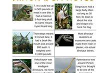 kids Dino facts