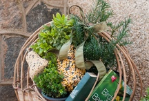 Garden Gift Ideas / Home-grown gifts from the garden make lovely presents! www.meadowsfarms,com