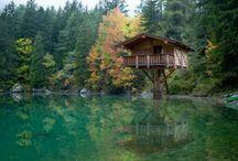 Tree House : my dream !
