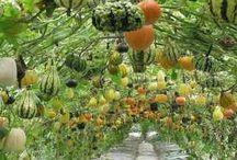 Autumn / ...the season of mist and mellow fruitfulness