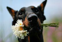 my favourite dog breeds