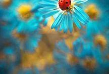 * Leppäkertut * Ladybugs *