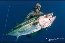 Spearfishing Madagascar