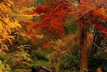 Fall beauty / by Janese Williams