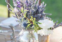 Lavender Shoot
