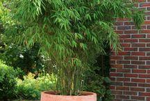 Grassen &  Bamboo