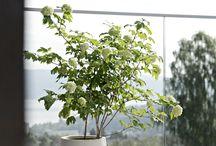Plants & Pots & Vases