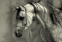 Horses Yo! / by Jessie Mattos