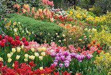 natura e giardini