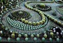cactus arte
