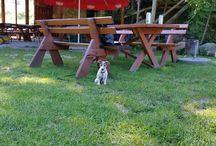 ZARA  - Jack Russell Terrier / Jack Russell Terier