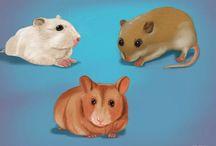 Como criar hamsters