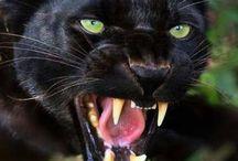 Mój instynkt wściekłego  kotka