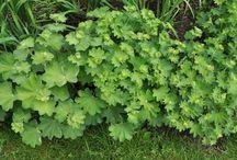 Planten voor zon of halfschaduw