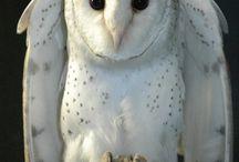 Owls =33