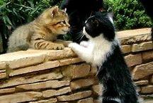 Cicaverzum*Kitten universe