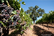 Sonoma County / Visiting Sonoma County is an amazing experience full of historical attractions, fine restaurants and world-class wines. Experience the beauty Sonoma County has to offer...