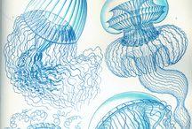 morskie opowiesci