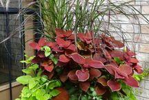 Vackra växter / Vackra bilder av växter och trädgård