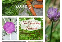 Zone 3 Specific Gardening / What plants grow best in zone 3? How you can best plant your garden.