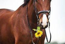 Koń ♥
