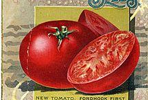 Art - Vintage seed packages