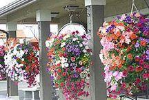 Závěsné květináče