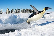My Wonder Zoo : Happy Feet ! / Penguins, Rockhopper Penguins, Puffins
