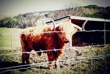 {Isle of Skye, Scotland} / In the Scottish Highlands