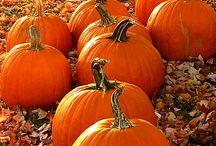 tök, ősz, dekoráció