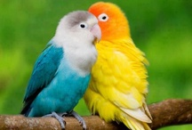 Beautiful Birds / All types of amazing birds that this wonderful planet has to offer...