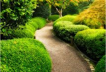 Garden: Paths and Drives