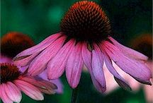 Late SuMmEr Bloomzzzzz / by Leslie Gard