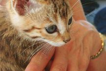 My Half Bengal Kitten