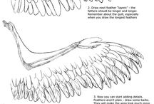 wings/feathers